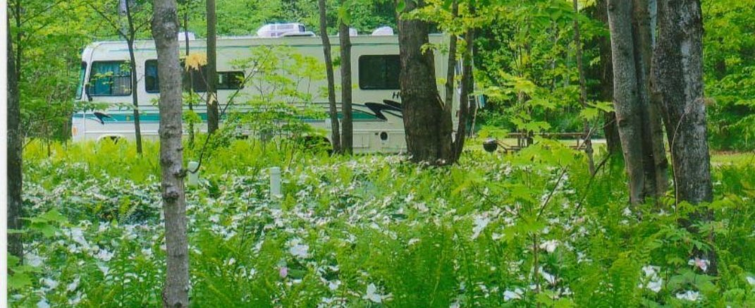 Atmosfera del Campeggio green