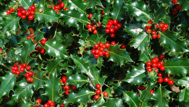 Natale Green